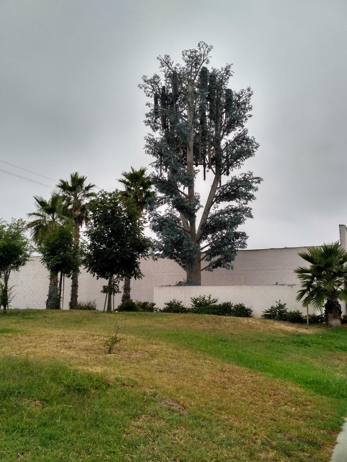 США Лос-Анжелес день второй, часть-1